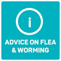 advice on flea and worming